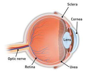 What Is Scleritis? - American Academy of Ophthalmology
