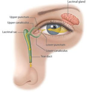 Dry Eye Treatment American Academy Of Ophthalmology
