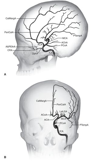 Branches Of The Internal Carotid Artery American Academy Of