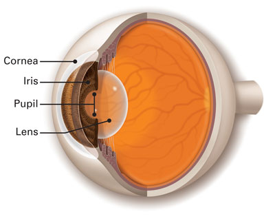 Diagram of Cornea, Iris, Lens and Pupil in the eye