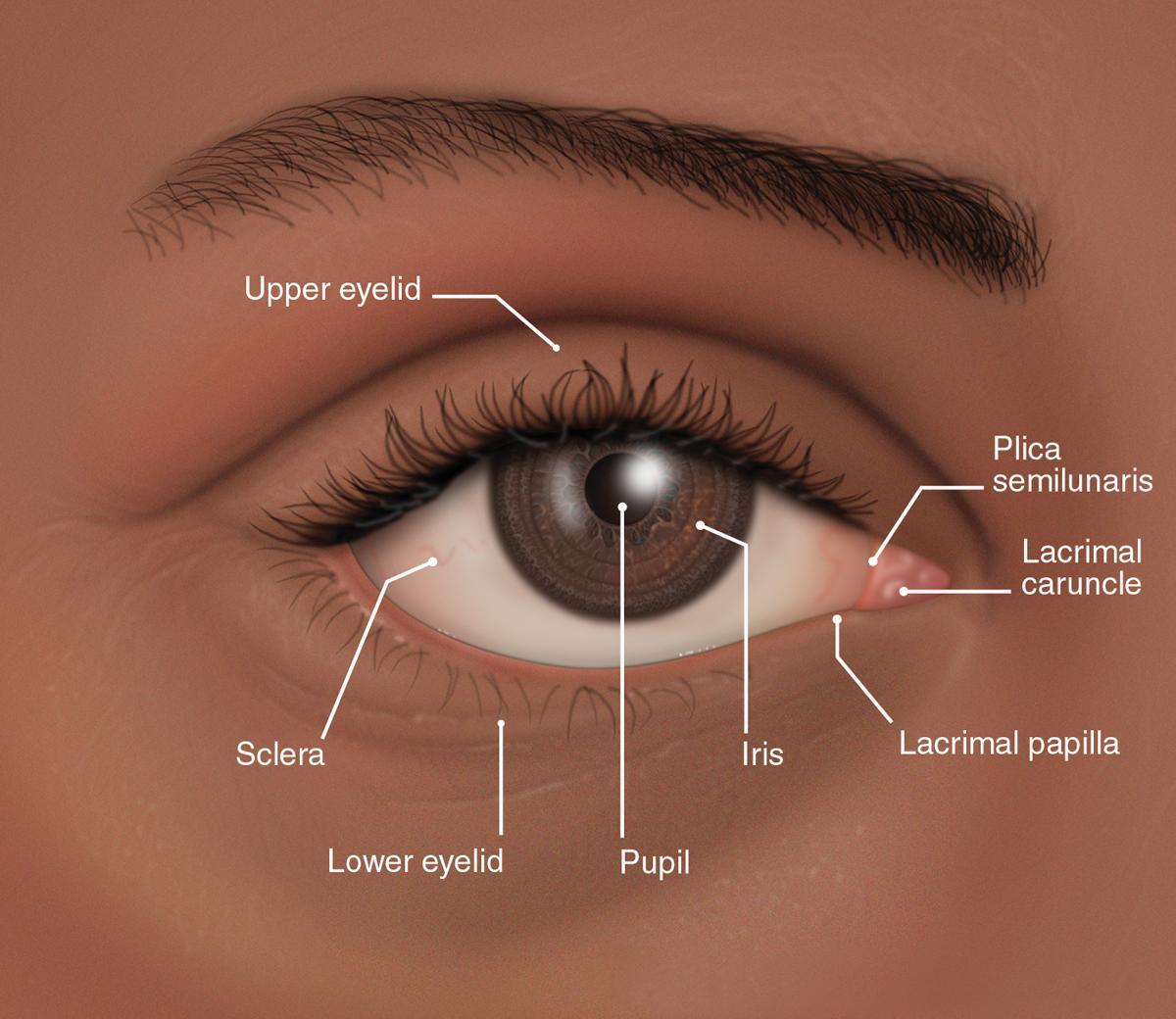 plica semilunaris swollen eye allergies - HD1200×1040