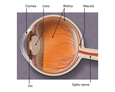What Is Macular Degeneration American Academy Of Ophthalmology