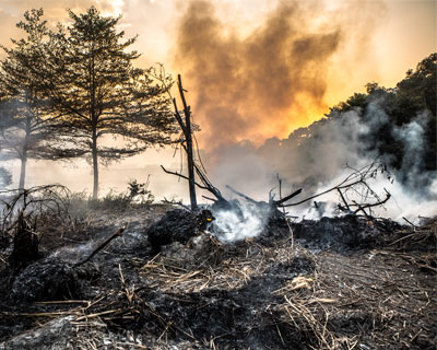 Burned landscape with scorched grass and trees and smoke rising into the sky