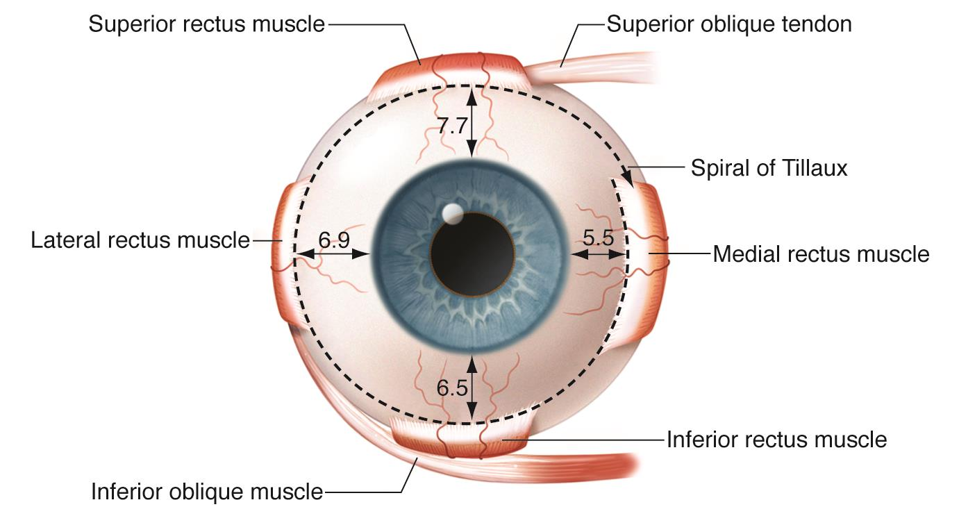 Spiral of Tillaux - American Academy of Ophthalmology