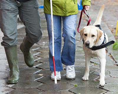 Blind person walking with service dog and cane
