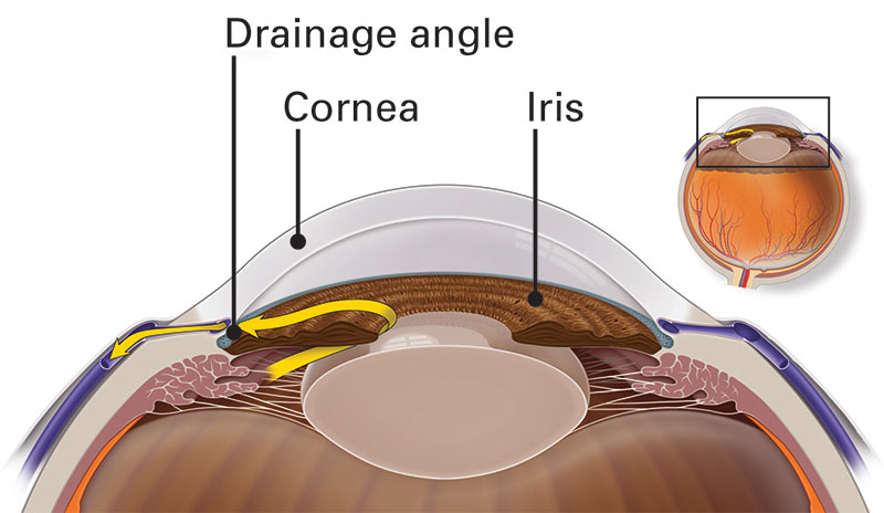 Illustration of the drainage system in the front of the eye, which is affected by glaucoma, including the drainage angle, cornea and iris.
