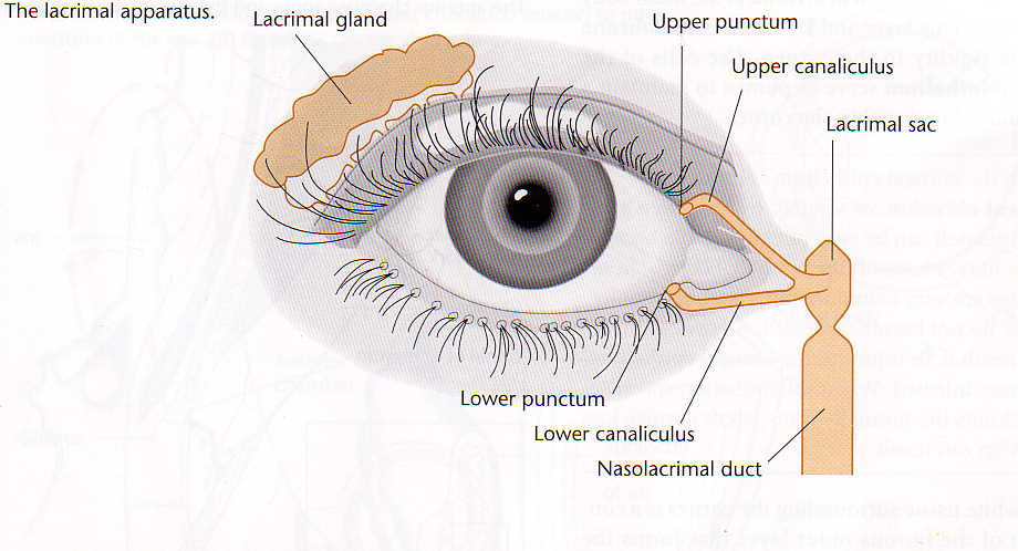 Lacrimal System Disorders - American Academy of Ophthalmology