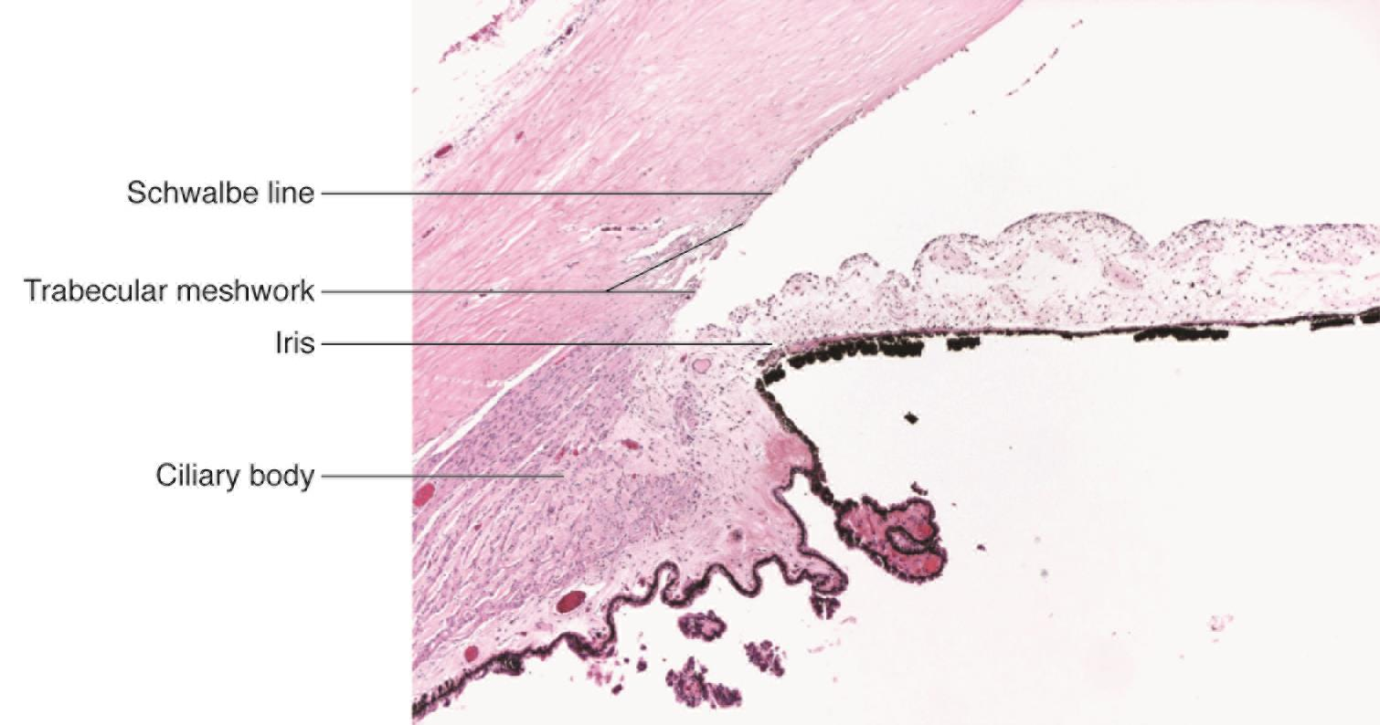 The normal anterior chamber angle - American Academy of Ophthalmology