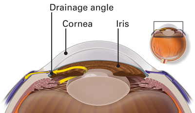 Diagram of Aqueous humor and Drainage Angle system of the eye