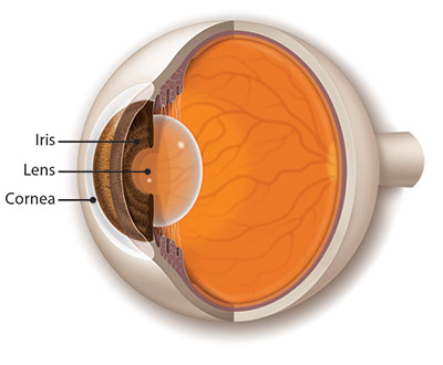 Side-view illustration of the eye's cornea